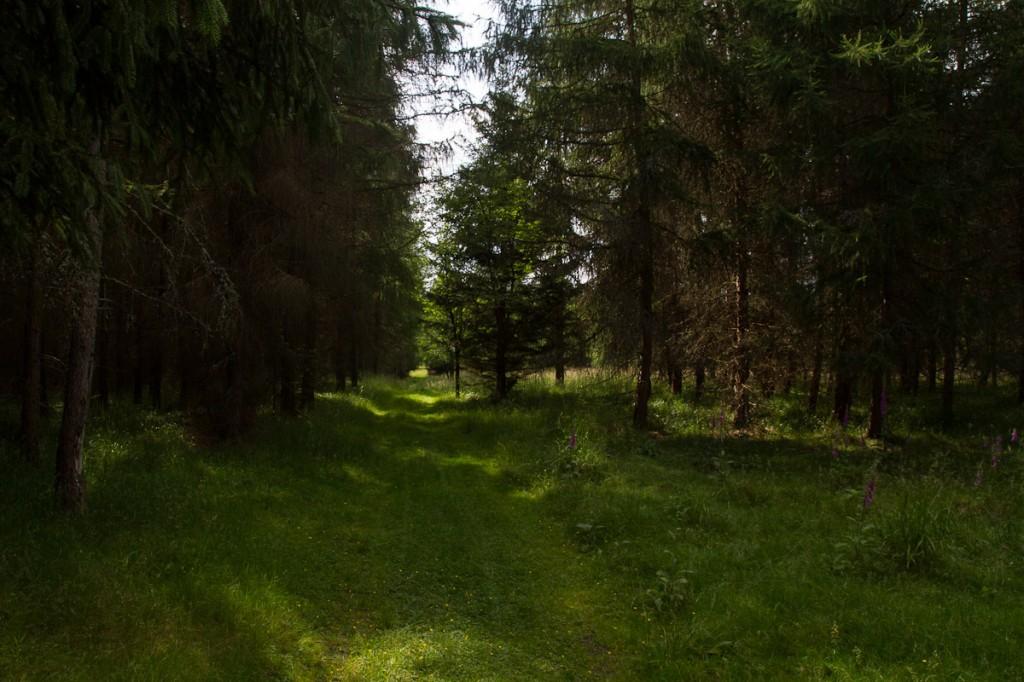 Weg zur Ruine Königsburg