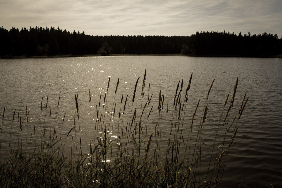Kiefhölzer Teich