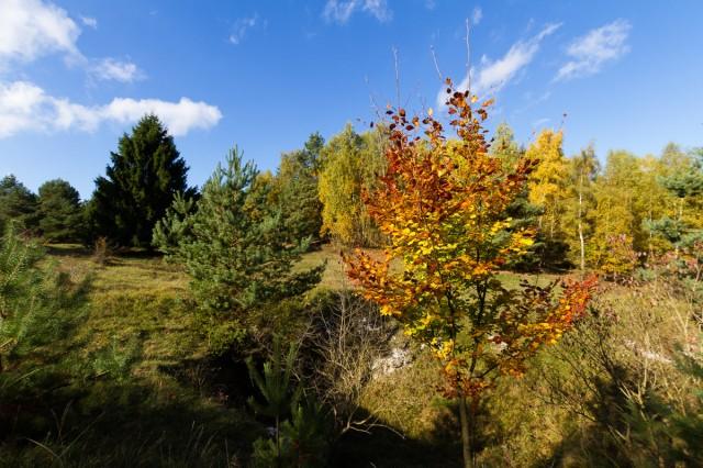 Herbst an den Sattelköpfen