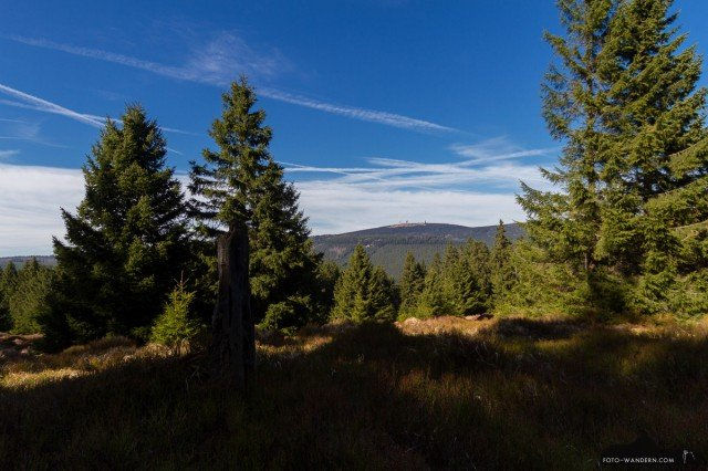 Brockenblick vom Wurmberg