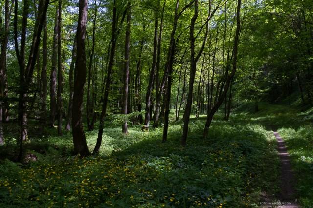 auf dem Weg zur Tiefenbachmühle im Naturpark Südharz02©Andreas Levi