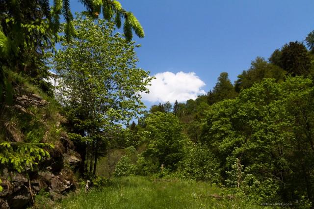 auf dem Weg zur Tiefenbachmühle im Naturpark Südharz03©Andreas Levi