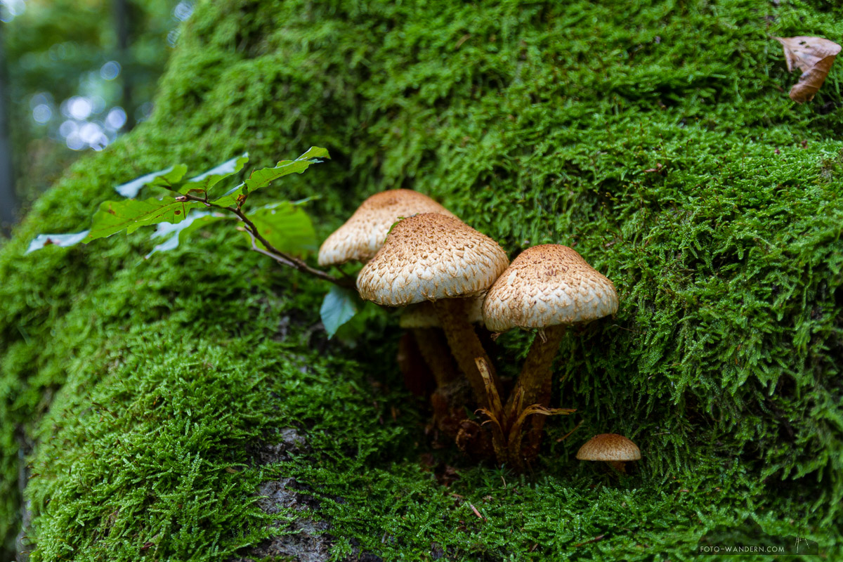 Fotowandern im Harz