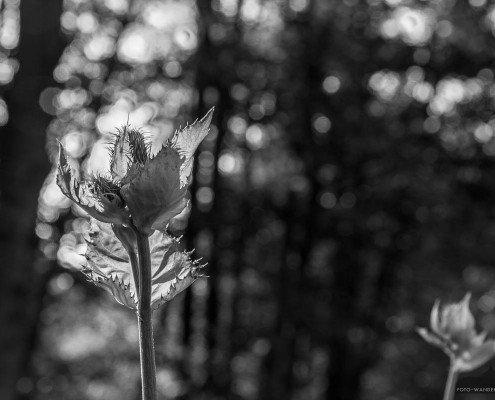 © Andreas Levi - Foto-Wandern.com