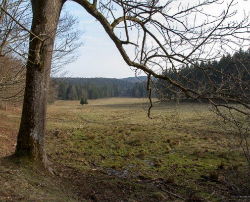 Steinmuehlental © Andreas Levi - Foto-Wandern.com-IMG_0353