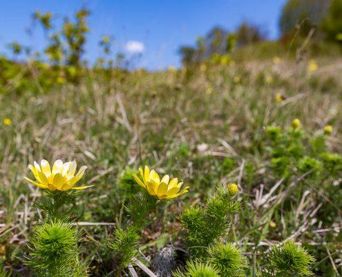 Fotowanderung Orchideenland am Wipperdurchbruch Günserode © Andreas Levi - Foto-Wandern.com
