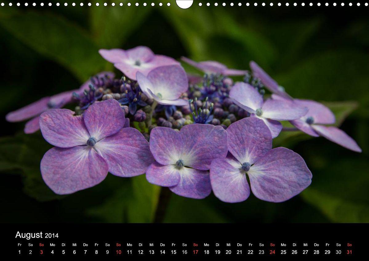 flower power kalender mit blumenmakros andreas levi. Black Bedroom Furniture Sets. Home Design Ideas