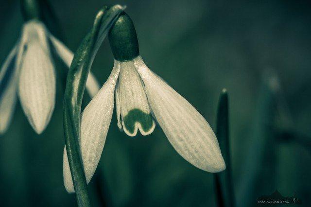 Frühling © Andreas Levi