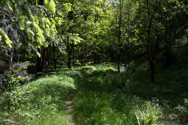 auf dem Weg zur Tiefenbachmühle im Naturpark Südharz01©Andreas Levi