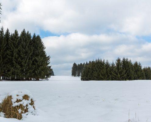 Winter-Rundwanderung Pfeiferberg bei Benneckenstein
